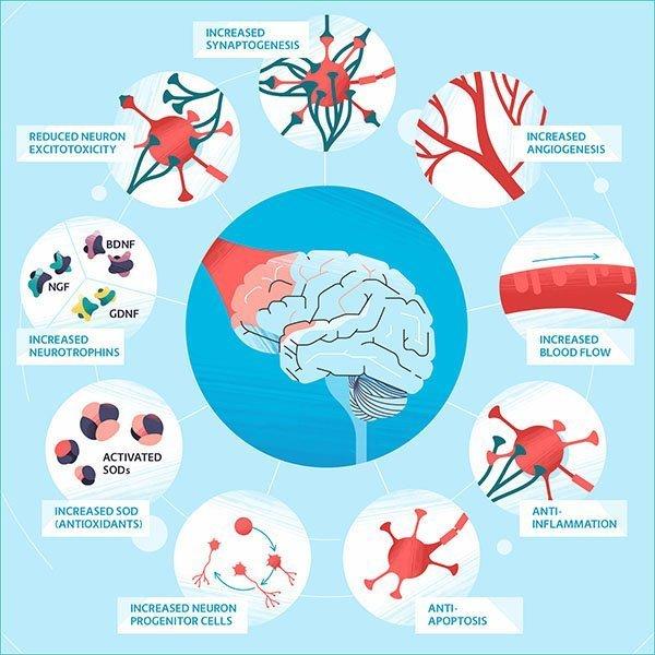 brain photobiomodulation benefits